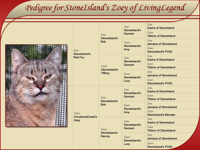 Stone Island's Zoey of Living Legend (retired) - Pedigree