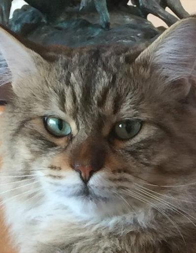 Butch Catsidy